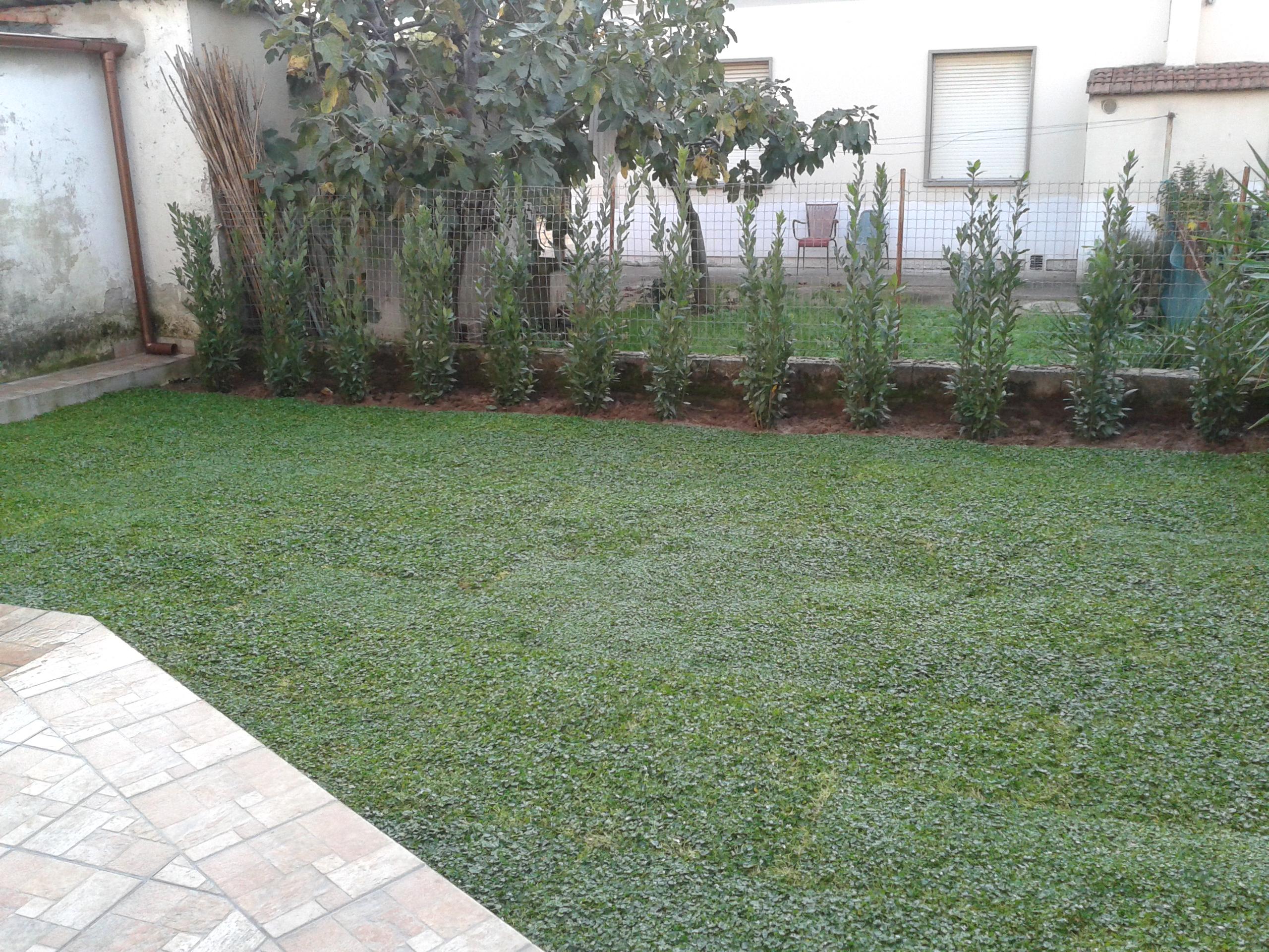 Mgr giardini di mochi simone realizzazione e manutenzione for Realizzazione giardini firenze